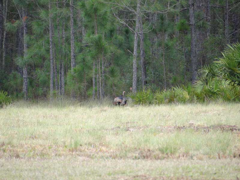 Florida Deer Hunting